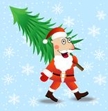 Santa claus carries a green christmas tree Royalty Free Stock Images