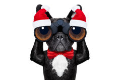 Santa claus christmas dog Stock Photography