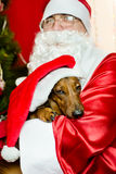 Santa Claus and christmas dog Stock Image