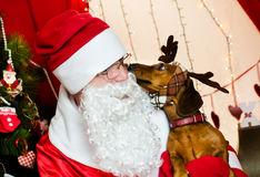 Santa Claus and christmas dog Stock Photos