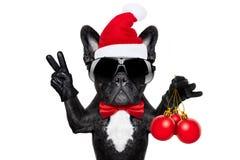 Santa claus christmas dog. Isolated on white background, holding xmas decoration balls isolated on white background and victory peace fingers Stock Images