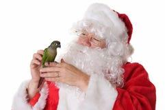Santa Claus con un uccello verde di conuro della guancia fotografie stock