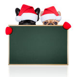 Santa claus couple of two dogs Royalty Free Stock Photography
