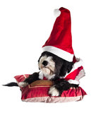 Santa claus dog. A sweet assistant of Santa Claus Royalty Free Stock Images