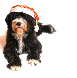 Santa claus dog Stock Photography