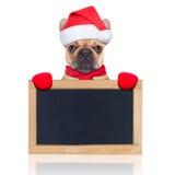 Santa claus dog Royalty Free Stock Photography