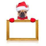 Santa claus dog Stock Photos
