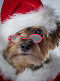 Santa Claus Dog- Christmas dog with glasses. A very serious looking Yorkie as Santa.  Have you been naughty?  Dog in Santa Clause Costume with red glasses Royalty Free Stock Photos