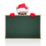 Santa claus dog Royalty Free Stock Photo