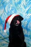 Santa Claus Dog. This is a dog in Santa Claus hats Royalty Free Stock Photo