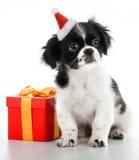 Santa Claus - dog Royalty Free Stock Image