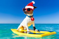 Surfer christmas santa claus dog stock photography