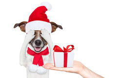 Santa claus excited and surprised dog Royalty Free Stock Photos