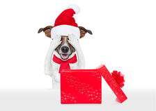 Santa claus excited and surprised dog Stock Image