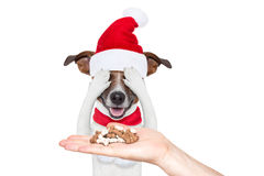 Santa claus excited and surprised dog Stock Photo