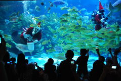 Santa Claus  feeds fish. KUALA LUMPUR, MALAYSIA-DEC.25 : A professional diver wearing a Santa Claus suit feeds fish inside a giant aquarium as part of Royalty Free Stock Images