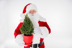 Santa Claus with fir tree in pot Stock Image