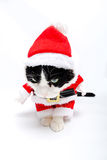 Santa Claus hat Cat Stock Image