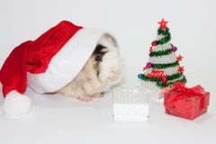 Santa Claus hat with christmas tree and guinea pig Royalty Free Stock Photos