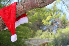 Santa claus hat hanging on tree Royalty Free Stock Photo