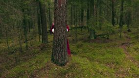 Santa claus hiding behind tree in the woods stock video footage
