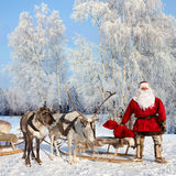 Santa Claus and his reindeer in forest. Santa Claus are near his reindeers in snowy forest Stock Photo