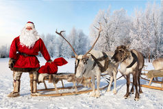Santa Claus and his reindeer in forest. Santa Claus are near his reindeers in snowy forest Royalty Free Stock Image
