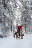 Santa Claus and his reindeer in forest. Santa Claus riding in sleigh and driving his harness of reindeer in the fairy winter forest Royalty Free Stock Photography