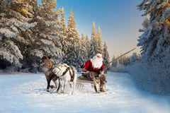 Santa Claus and his reindeer in forest. Santa Claus riding in sleigh and driving his harness of reindeer in the fairy winter forest Royalty Free Stock Image