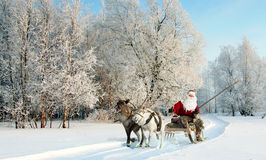 Santa Claus and his reindeer in forest. Santa Claus riding in sleigh and driving his harness of reindeer in the fairy winter forest Stock Photo