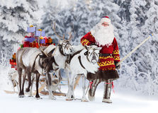 Santa Claus and his reindeer. Santa Claus are near his reindeers in harness in the winter forest Royalty Free Stock Images