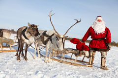 Santa Claus and his reindeer. Santa Claus are near his reindeers in harness in the winter forest Royalty Free Stock Photo