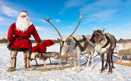 Santa Claus and his reindeer. Santa Claus are near his reindeers in harness in the winter forest Stock Photos