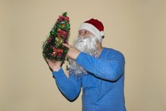 Santa Claus holding a fresh Christmas tree and pointing with his finger. Christmas holiday, New Year. royalty free stock image