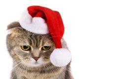 Santa Claus katt som isoleras på vit bakgrund Arkivbilder