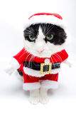 Santa Claus Kitty imagem de stock royalty free