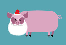 Santa Claus Pig. Farm animal with beard and moustache. Christmas Royalty Free Stock Images