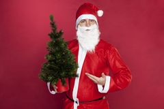 Santa Claus points to the perfect Christmas tree. On the red background stock image