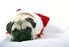 Santa Claus Puppy Royalty Free Stock Photography