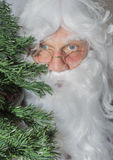 Santa Claus que esconde atrás de uma árvore de Natal Foto de Stock Royalty Free