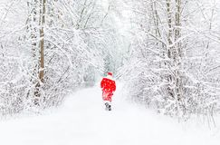 Santa Claus in red costume walk in winter forest afar. Back view royalty free stock photo