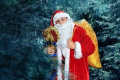 Santa Claus in a winter forest. Christmas and new year holiday. Santa Claus in a red fur coat worth in the winter woods. new year and christmas stock photography