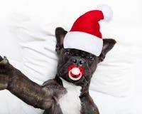 Santa claus selfie dog stock image