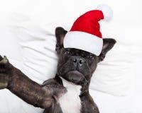 Santa claus selfie dog royalty free stock photography