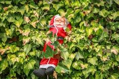 Santa Claus som stiger ned i en trädgård Fotografering för Bildbyråer