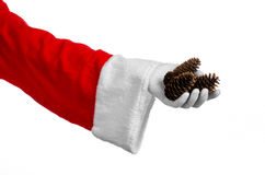Santa Claus theme: Santa holding a fir cone in his hand on a white background Royalty Free Stock Image