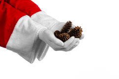 Santa Claus theme: Santa holding a fir cone in his hand on a white background Stock Photo