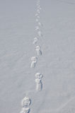 Santa claus trace on snow. White winter snow with footmark or trace on trail way on santa claus shoes at cold christmas or xmas and new year holiday outdoor Stock Photo