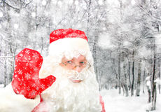 Santa Claus in Winter Forest Royalty Free Stock Image