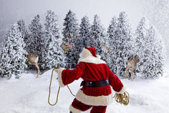 Santa Claus wrangling reindeer Stock Images